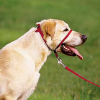 Dog Collar Round-Up, Part IV: The Gentle Leader Head Halter