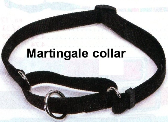 Martingale Dog Collar How To Use