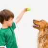 Dog Training and Child Rearing (or Vice-Versa)