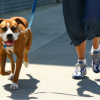 Why Walk Your Dog?  (The Answer May Surprise You!)