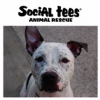 We are a local NYC animal shelter . . . Anthony's consultation and training worked WONDERS
