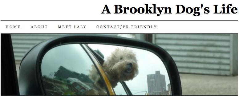 BrooklynDogsLife