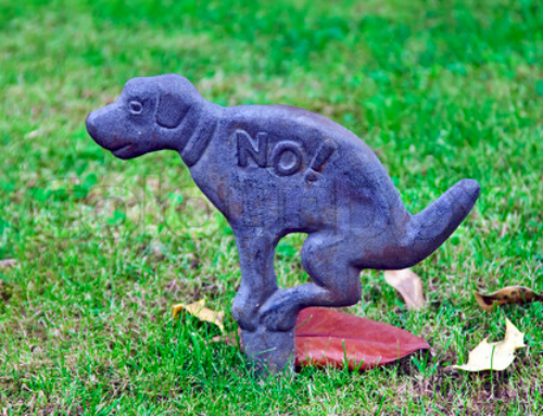 """How To Say """"No!"""" In Dog Language (Effectively)"""
