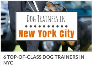 Dog trainers nyc