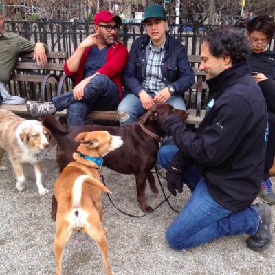 Dog Park Behavior