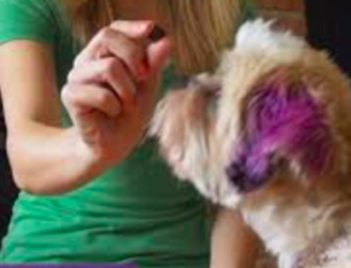 """Why """"Luring"""" With Treats Isn't How You Want To Obedience Train Your Dog"""