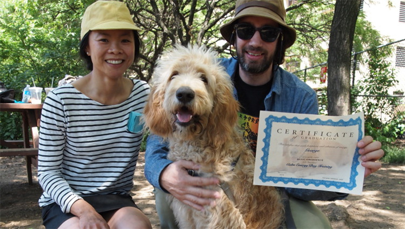 Basic Dog Obedience Class in Brooklyn